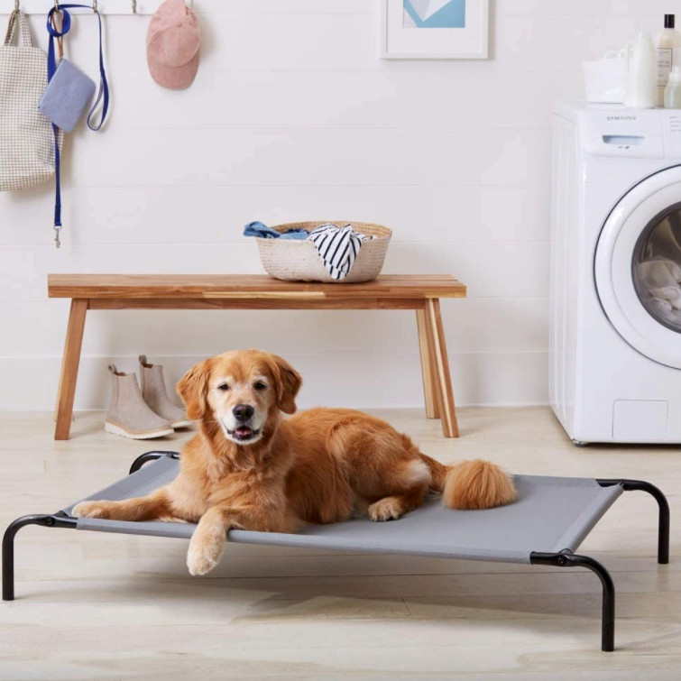 Dog on an elevated cooling bed