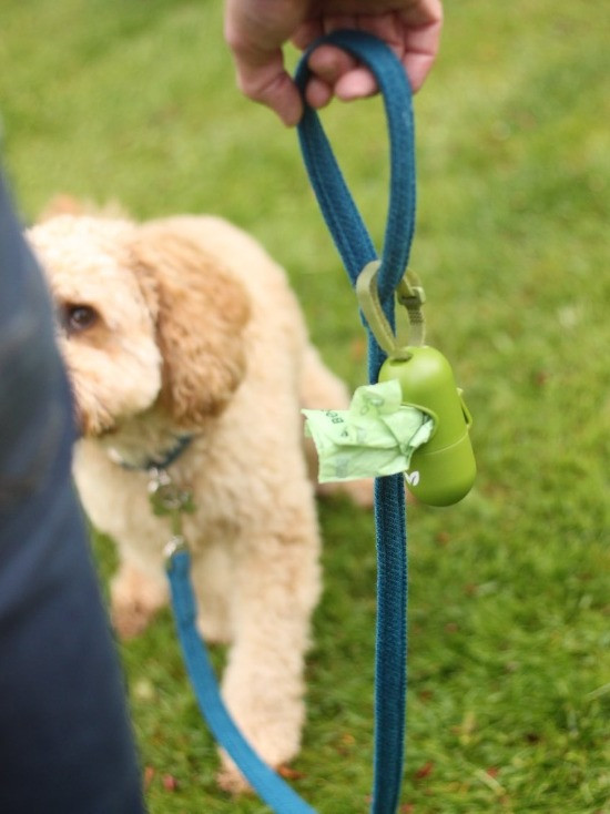 A cockapoo on a dog lead with an Earth Rated dog poo bag dispenser