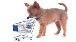Best Dog Crates & Accessories