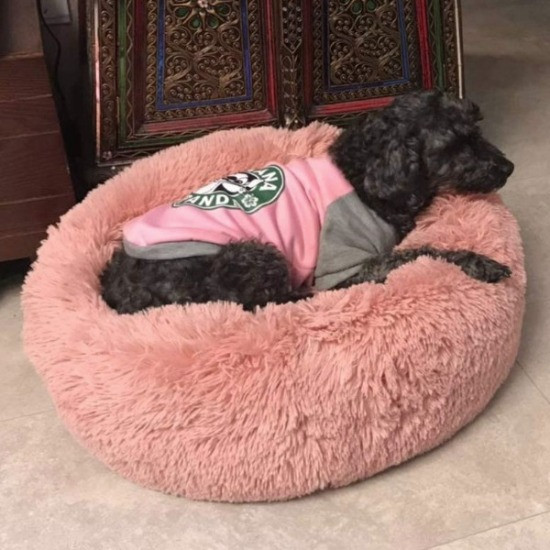 dog laying on an anti-anxiety dog bed