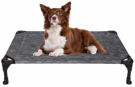 dog on a elevated or raised dog bed