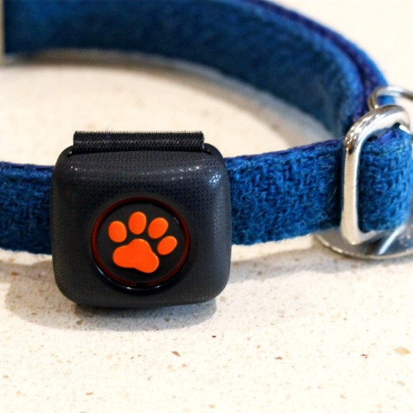 PitPat activity tracker on a blue dogs collar