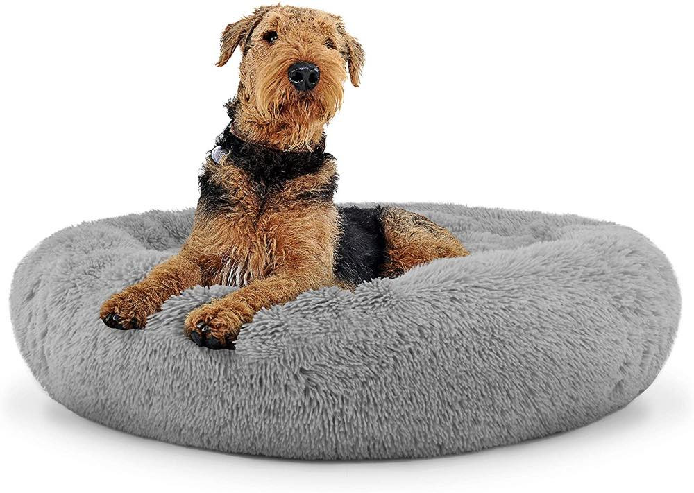 Dog on an anti-anxiety dog bed
