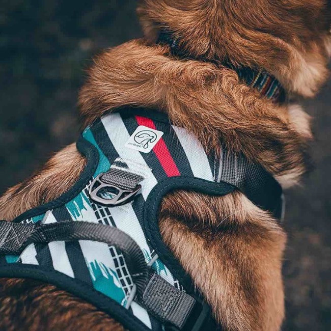 Close up showing a dog wearing an Embark patterned dog harness