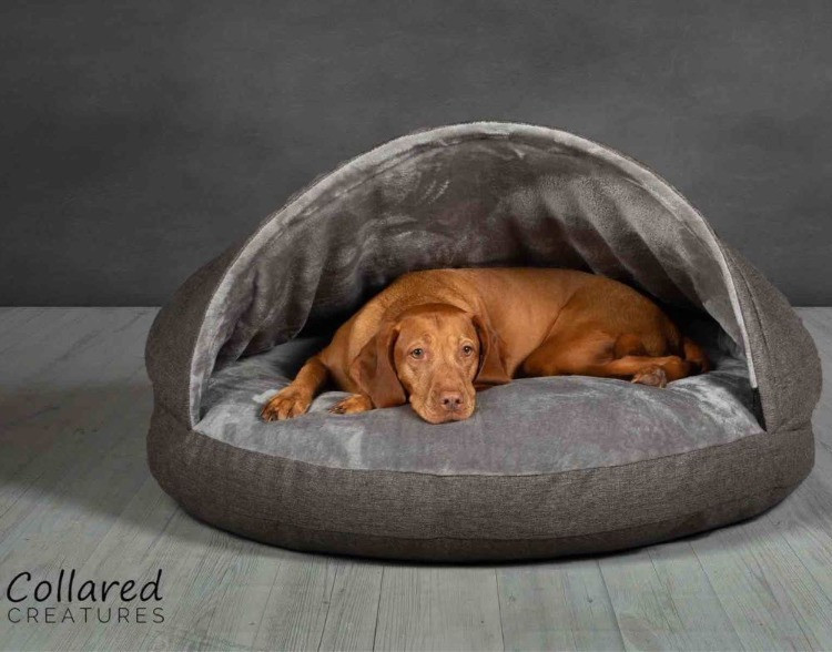 Dog in a collared creatures dog cave bed