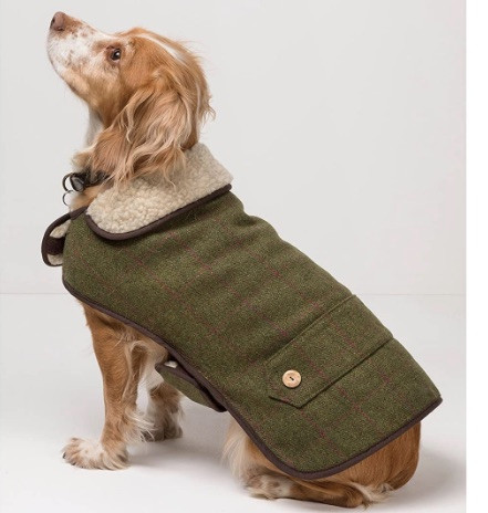A dog wearing a riddle tweed winter dog coat