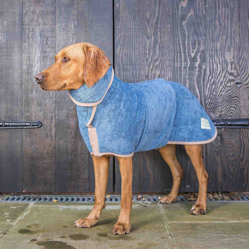 Dog in blue Ruff and Tumble dog coat