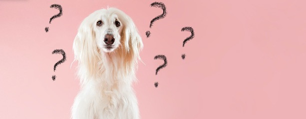 A confused dog with question marks