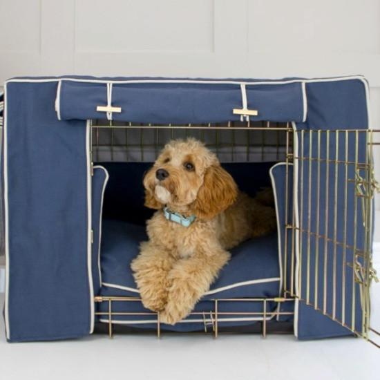 Cockapoo in a dog crate with blue cover