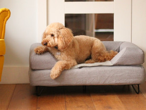 Topology Dog Bed Review - Ultimate Canine Comfort