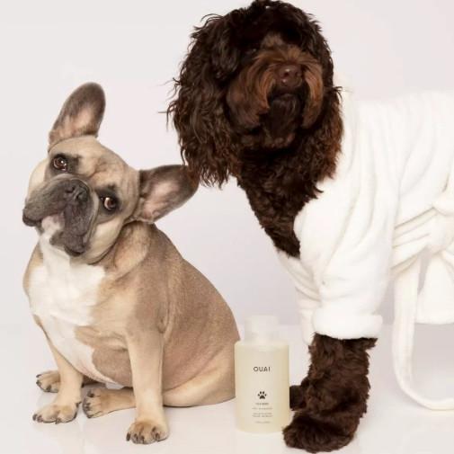 A french bull dog, cockapoo and bottle of Ouai pet shampoo