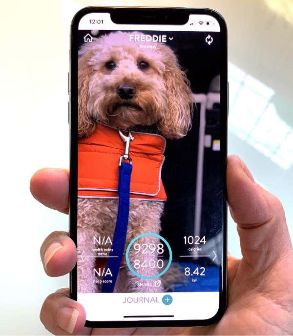Phone screen displaying the FitBark App