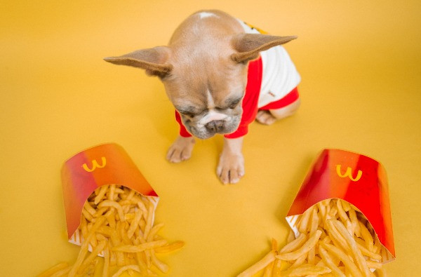 A dog with two portions of chips