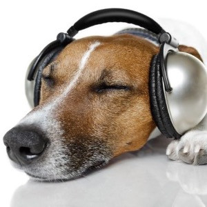 A dog wearing headphones