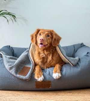 Top 10 Seriously Stylish Dog Beds