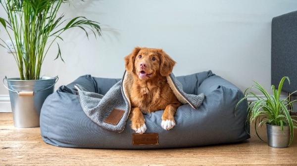 Dog laying on grey dog bed