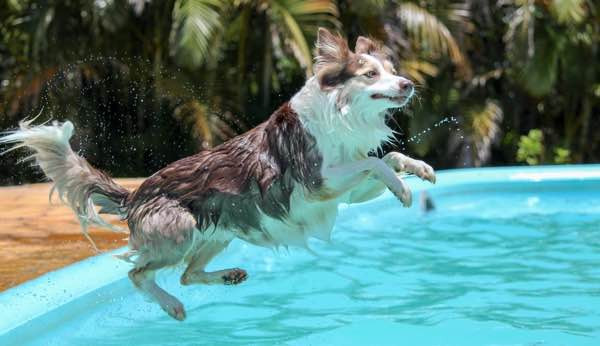 Dog cooling down in a swimming pool
