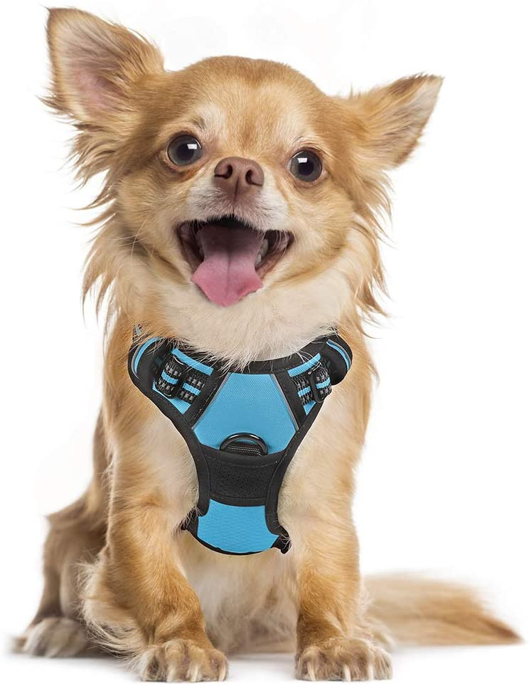 Best Harness for small dogs - a rabbit goo blue small dog harness.