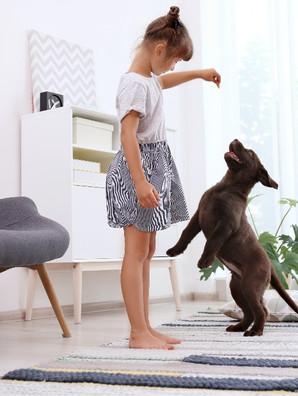 Top 5 Puppy Training Treats