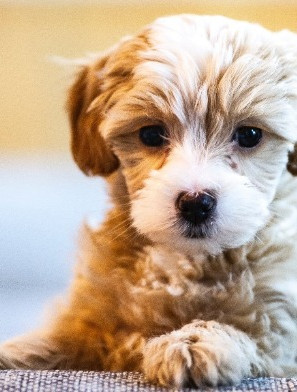 The Key to Puppy Socialisation