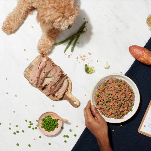 A cockapoo with ingredients used in butternut box dog food