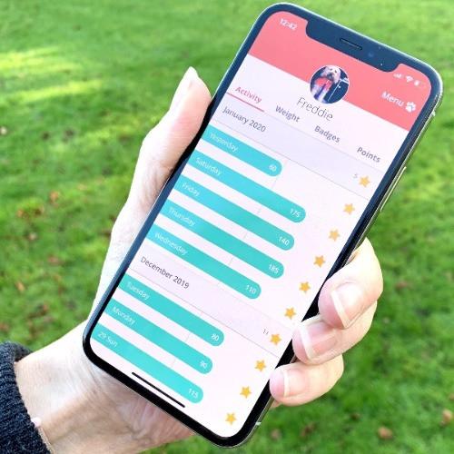 Phone screen displaying the PitPat app
