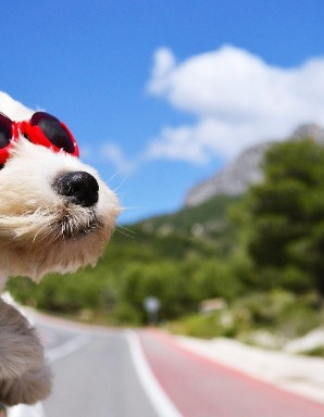 Bringing a Puppy Home : transporting your puppy in the car