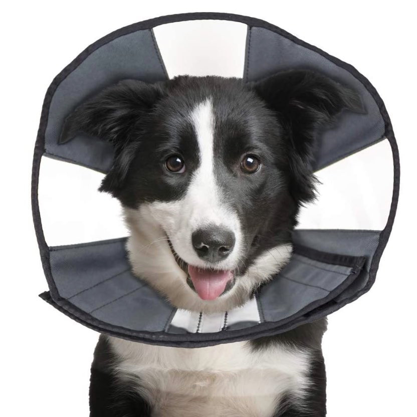 Dog wearing a ProCone recovery dog cone