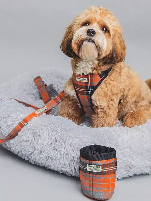 Barkley & Fetch dog training treat bag in orange tarten with a cockapoo in a matching harness with lead and collar