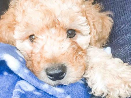 Puppy's First Day : Puppy's First Night