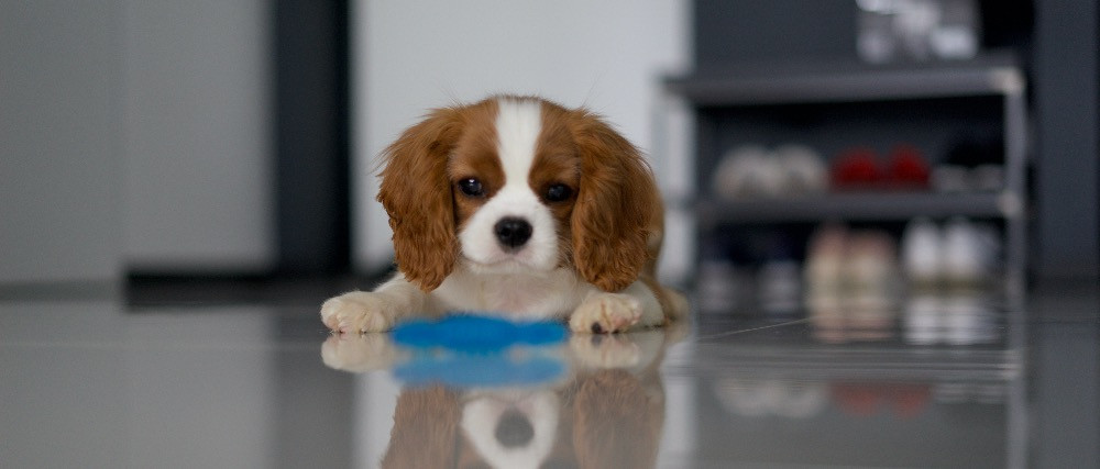 puppy finding playing scattered dog treat game