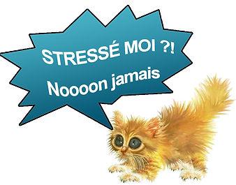 Chat_stresse.jpg