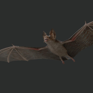 bat_render_1.jpg