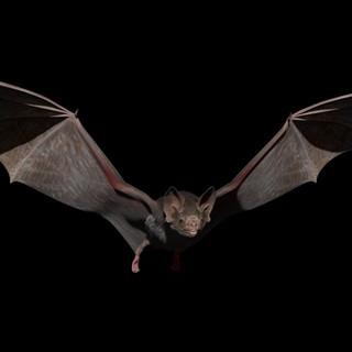 bat_turntable_v003.MPG