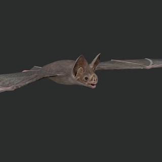 bat_render_3.jpg