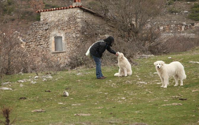 Cathy and Abruzzese Dogs at Pagliare di Tione