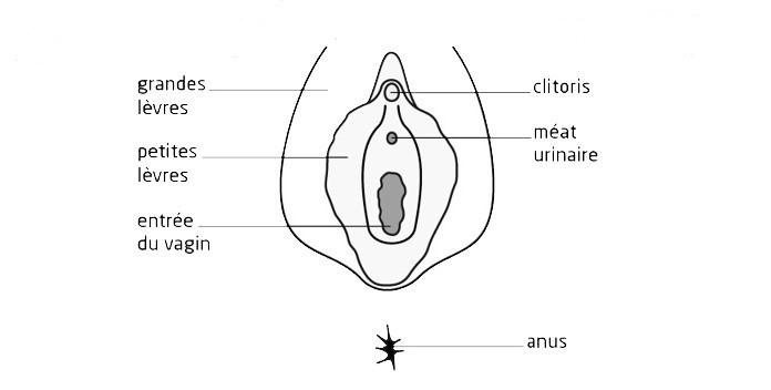 anatomie de la vulve hygiene intime