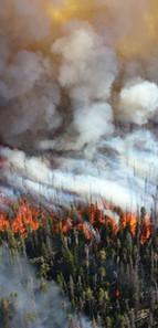 Wildfire Management