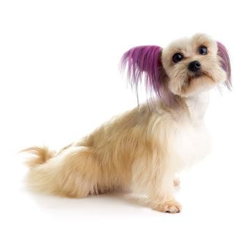 Top Performance Dog Hair Dye Gels | smarterideas