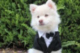 dog-1951211_1920.jpg