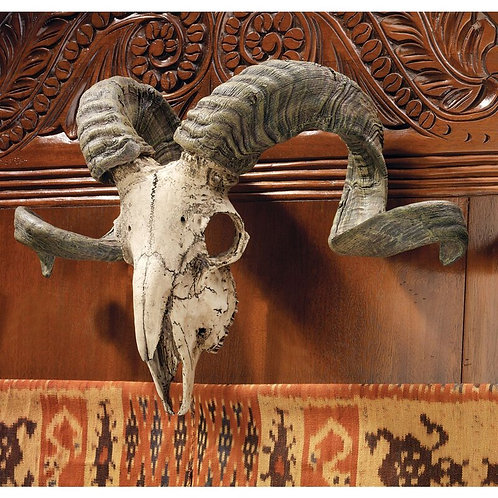 Corsican Ram Skull and Horns Trophy Wall Décor