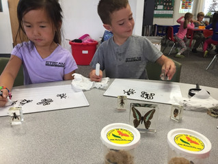 Spiders, Caterpillars, and Beetles...Oh My!