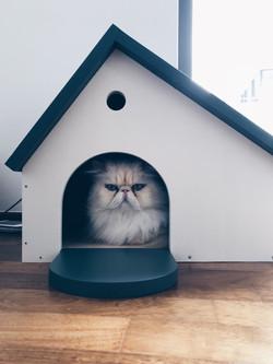 Casuta pisici