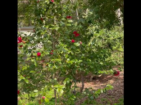 万葉苑、春の顔(その2)