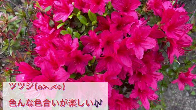 春らしい鮮やかな色合い(^^♪