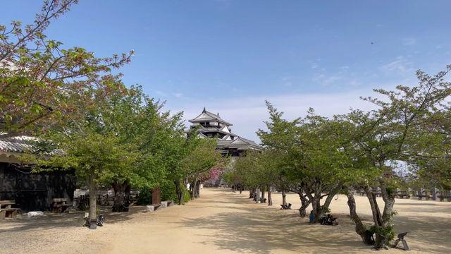 松山城です(; ・`д・´)