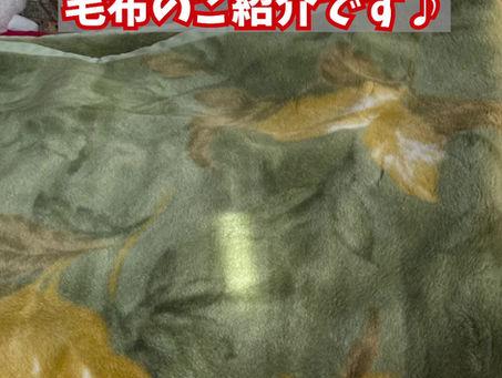 毛布のご紹介( ^ω^ )
