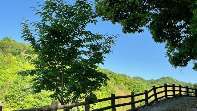 鳥のさえずり(菅沢町)
