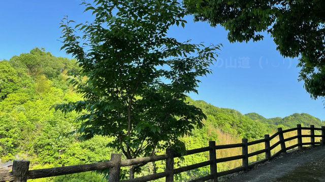 春の山道:菅沢(すげさわ)町