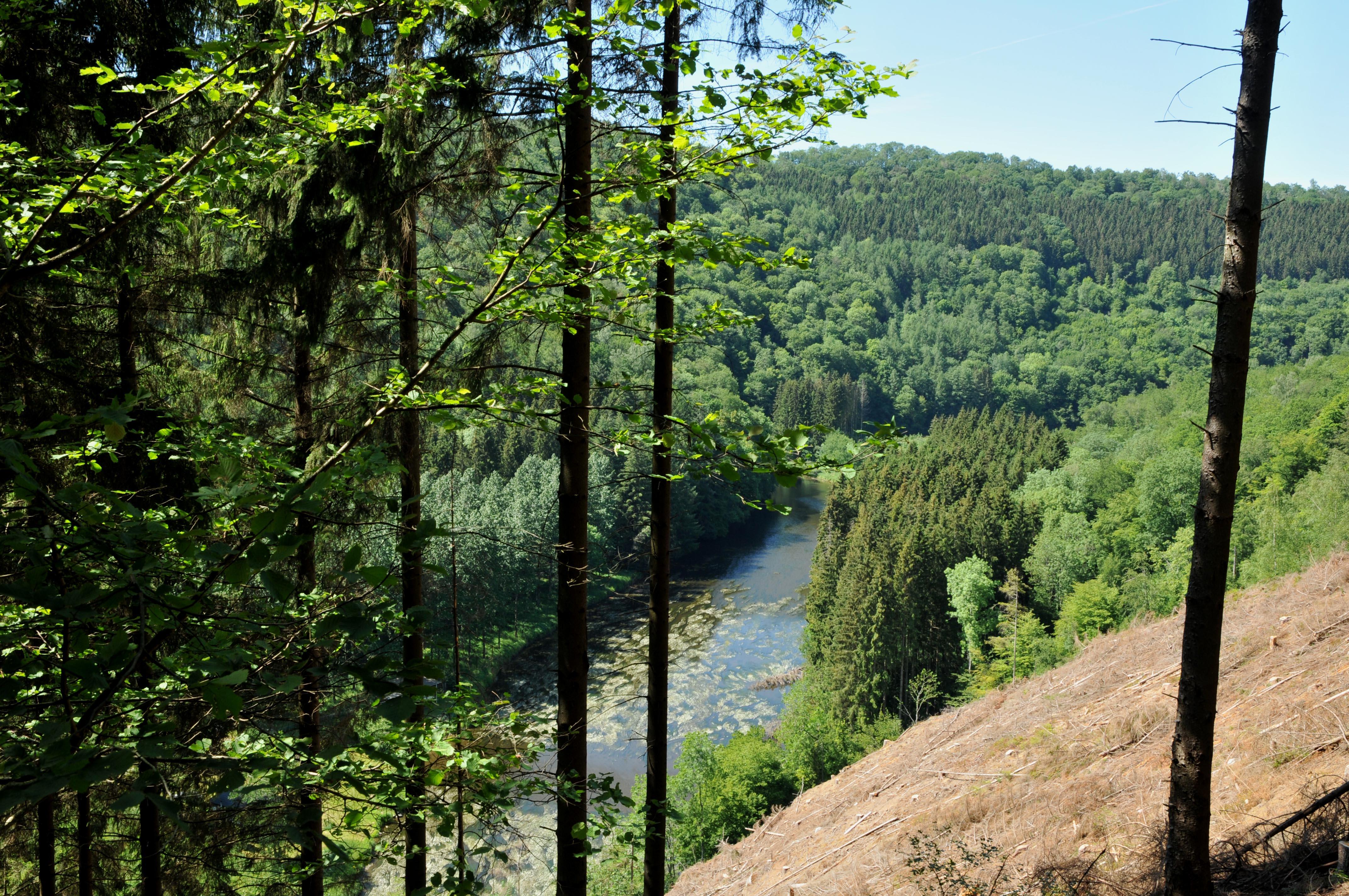 rivière au milieu d'une forêt